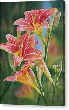 Vintage Red Orange Lilies Canvas Print by Sharon Freeman