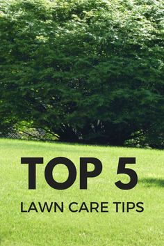 Top 5 Lawn Care Tips - Gardening Know How's Blog