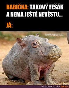 Hippopotamus, Funny Facts, Captain America, Bff, Real Life, Haha, Naruto, Retro, Memes