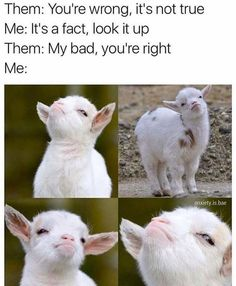 My baby goats make this face all the time!!!