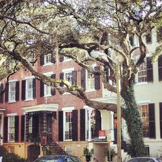 Beautiful Savannah homes…