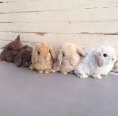 Bunnies and kisses ❤
