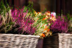 Auch Herbstzeit ist Pflanzzeit #News #Pflanzen