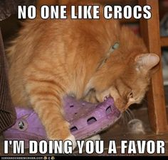 My crocs are the ONLY thing of mine that my cat will drag to another room and start chewing on.