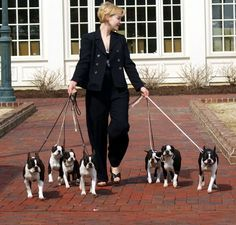 """Boston Terriers""""..omg how does she do it? I thought walking 4 was rough"""