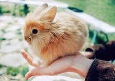 tatlı tavşanlar ile ilgili görsel sonucu