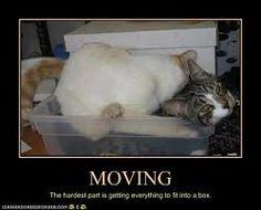 Image Result For Cheapest Moving Bo