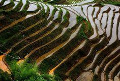 In Longji lassen sich zu jeder Jahreszeit die hübschen Reisterrassen bewundern. Während sie im Winter in Schneeweiß erstrahlen und den Eindruck eines schlafenden Drachen vermitteln, sind Frühling und Herbst die reizvollsten Jahreszeiten.