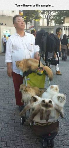 Man in Japan takes his cats everyday for people to see to raise awareness & more human compassion for cats ♡