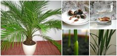 How to Grow Date Palm from Seeds (Video) | www.FabArtDIY.com