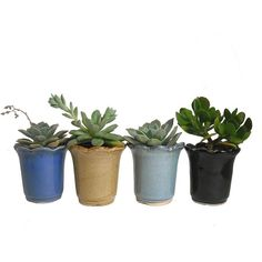 4 Potted Succulents In Round & Scalloped Rim Ceramic Planters Wedding... (€27) ❤ liked on Polyvore featuring home, home decor, floral decor, fillers, plants, flowers, nature, embellishment, detail and fall planters