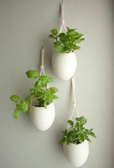 Pflanzen Hängend 9 besten hängende pflanzen bilder auf pinterest | hanging plants