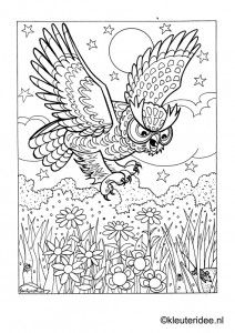 Owl Colouring Page | A\'s Night Owl Sleepover Party | Pinterest | Owl ...