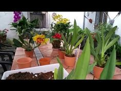 Recupera orquídeas con raíces podridas - YouTube