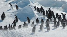 img-antartica-penguins2