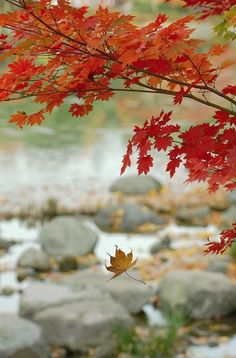 """Mother Nature doesn't care if you're having fun. Autumn Day, Autumn Leaves, Red Leaves, Autumn Scenes, Seasons Of The Year, Fall Pictures, Fall Season, Mother Nature, Scenery"