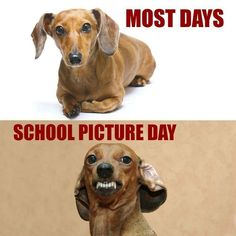 Dear Abby - Dachshund Memes and Pictures : Dachshund meme - school picture day Funny Pictures For Kids, Funny Animal Pictures, Funny Kids, Funny Animals, Cute Animals, Stupid Animals, Puppy Pictures, Animal Pics, Funny Images