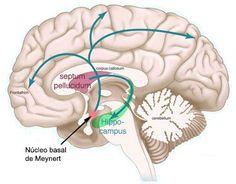 Las demencias corticales: enfermedad de Alzheimer, de Pick, atrofias lobares y cuerpos de Lewy