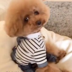 """🅛🅤🅧🅤🅡🅨 🅛🅐🅓🅘🅔🅢 🅒🅛🅤🅑's Instagram post: """"Tap twice for this little puppy 🤍 #luxuryladysclub #puppy #puppylove #fun #puppygoals #lovepuppies"""" Little Puppies, Puppy Love, Teddy Bear, Instagram Posts, Fun, Doggies, Fin Fun, Small Puppies, Tiny Puppies"""