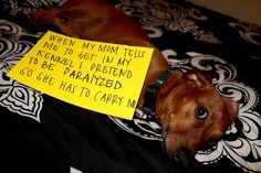 Copper can be a real ass sometimes…    Editor's note: That's a totally typical behavior in the DogShaming household.