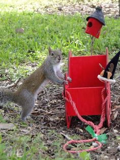Christmas Squirrel, Lizards, Chipmunks, Squirrels, Bird Feeders, Insects, Lovers, Water, Outdoor Decor