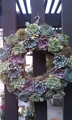 Living Wreath with succulents.