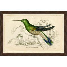 Jardines Hummingbird I Framed Print