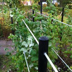 Greenhouse Gardening, Gardening Tips, Vegetable Garden, Garden Plants, Garden Projects, Garden Tools, Home Garden Design, Garden Fencing, Raised Garden Beds