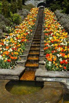 Stairs with Tulips (Tulipa), Mainau Island, Baden-Württemberg, Germany