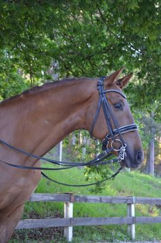 PRE for sale Horses, Animals, Horses For Sale, Equestrian, Animales, Animaux, Animal, Animais, Horse