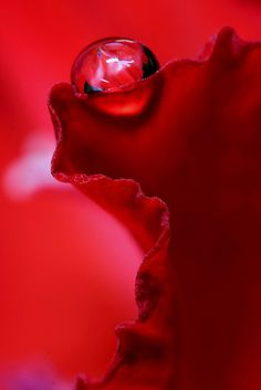 ~✤~ Dewdrop on Ruffle Red ~✤~