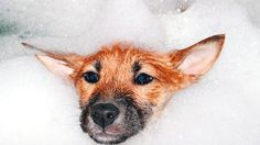 El Baño de las Mascotas ACA: http://www.ronniearias.com/columnistas/miguel-longo/el-bano-de-las-mascotas_28105.html