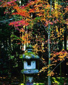 #kyoto #japan #fall #travel #redleaves #autumn #fujifilm #xt2 #xf56mmf12 #daitokuji #kotoin #garden #gardenlantern