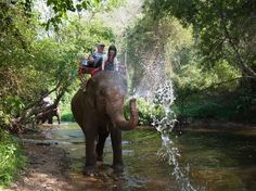 I have been on an Elephant ride but just in a circle not on a cool adventure