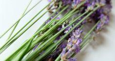 levander Herbs, Plants, Herb, Flora, Plant, Planting