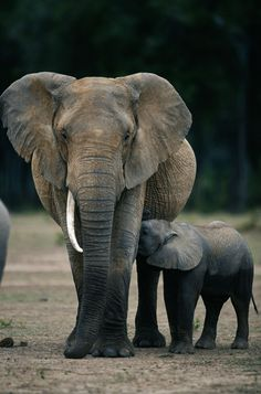 Poaching: we can all make a difference - Virgin.com