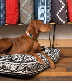 beds and collars Dog Houses, Pet Products, Beds, Collars, Fur, Puppies, Necklaces, Cubs, Dog Kennels