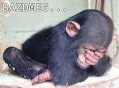 The Baby Chimpanzee by Schrödinger's Cat, via Flick Primates, Cute Baby Animals, Animals And Pets, Funny Animals, Baby Chimpanzee, Tier Fotos, Funny Animal Pictures, Monkey Pictures, My Animal