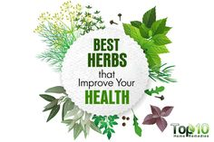 Herbs are used in different cuisines to add flavor to a dish without calories. At the same time, herbs provide many health benefits. In fact, herbal medicine has been used for thousands of years to treat different ailments. The healing and restorative powers of various herbs are pretty impressive and well recognized by experts. Today, …