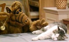 The whole reason that show was well received is because ALF was a puppet in a sitcom. The shows appeal was how different of an idea it was at the time. Sure there was the Muppet Show but that was Aliens, Alien Life Forms, Retro, Designer Dog Collars, Film Serie, Back In The Day, Childhood Memories, Favorite Tv Shows, Favorite Things