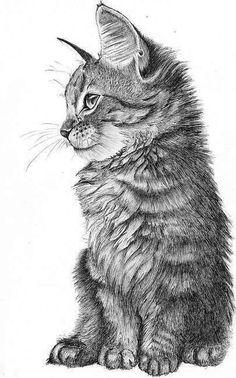 Dibuix a llapis d'un gat petit de perfil.