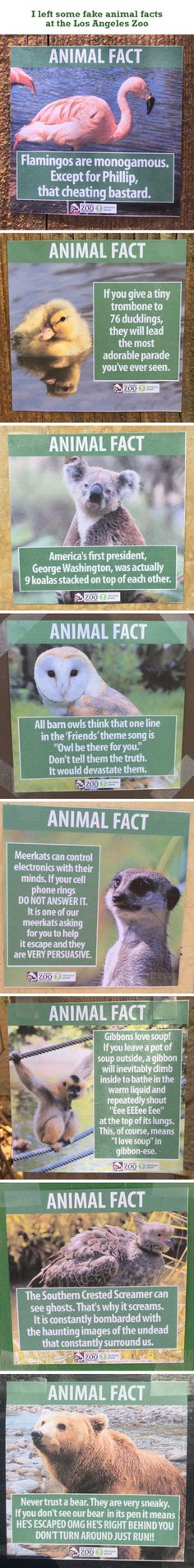 Animal Facts www.sta.cr/2BRM5 #animalfacts #fake #funny