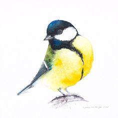 Galeria obrazów akwarelowych Karoliny Kijak, akwarele ptaków, zwierząt leśnych i innych aspektów przyrody.