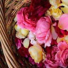 A British Rose rózsái