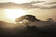 Vallée du Rift, Kenya#La Vallée du Rift s'étend sur plus de 7 000 kilomètres. Elle suit la grande faille qui parcourt l'Afrique de l'Est. De nombreux lacs et spectaculaires dépressions s'alignent sur la Vallée du Rift, offrant de magnifiques paysages. Entre falaises et anciens volcans, vous ne pourrez vous en lasser.#http://urlz.fr/3hlZ#serge.org