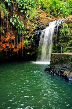 Rain Forest - Grenada (the most naturally preserved island in the West Indies - can't wait to visit)!!