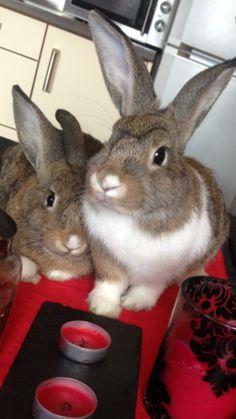 Flopsy & Mopsy - Twin sisters