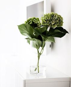 home decor inspiration Deco Floral, Arte Floral, Floral Design, Tropical Flowers, Fresh Flowers, Table Arrangements, Floral Arrangements, Fresco, Hydrangea Not Blooming