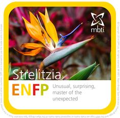 What MBTI plant type are you? ENFP