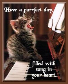 Have a purfect day